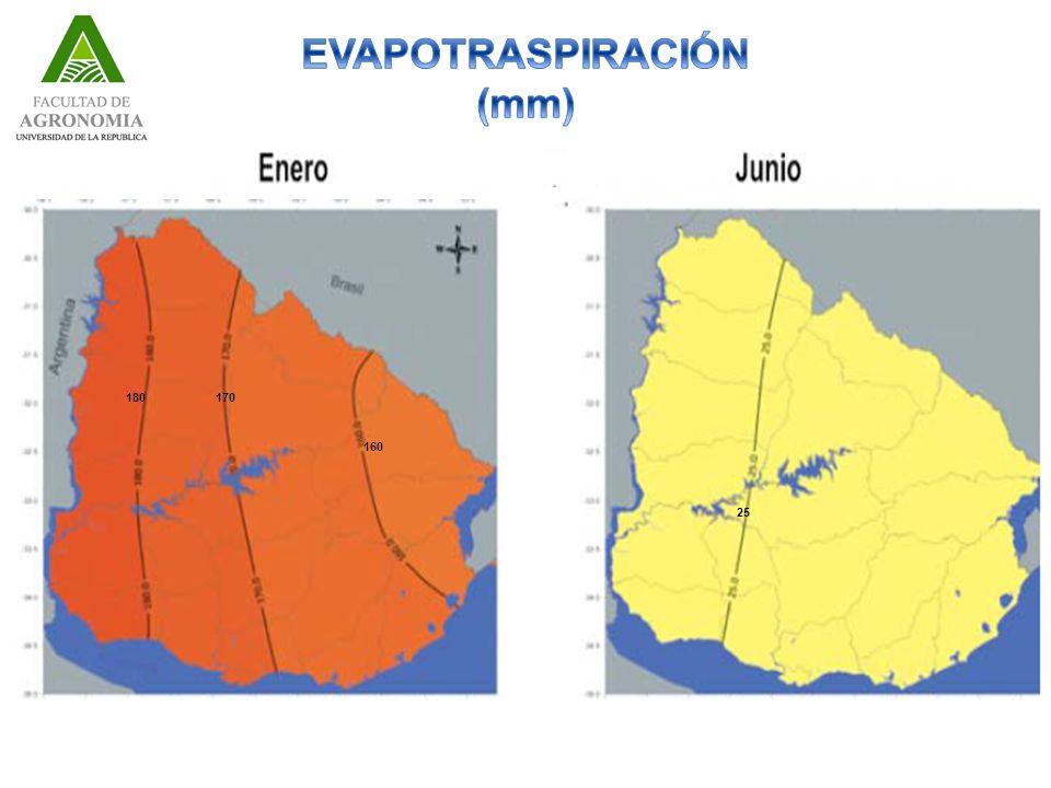 EVAPOTRASPIRACIÓN (mm)