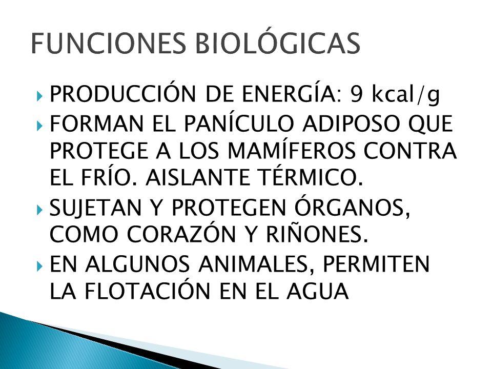 FUNCIONES BIOLÓGICAS PRODUCCIÓN DE ENERGÍA: 9 kcal/g