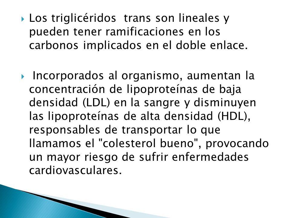 Los triglicéridos trans son lineales y pueden tener ramificaciones en los carbonos implicados en el doble enlace.