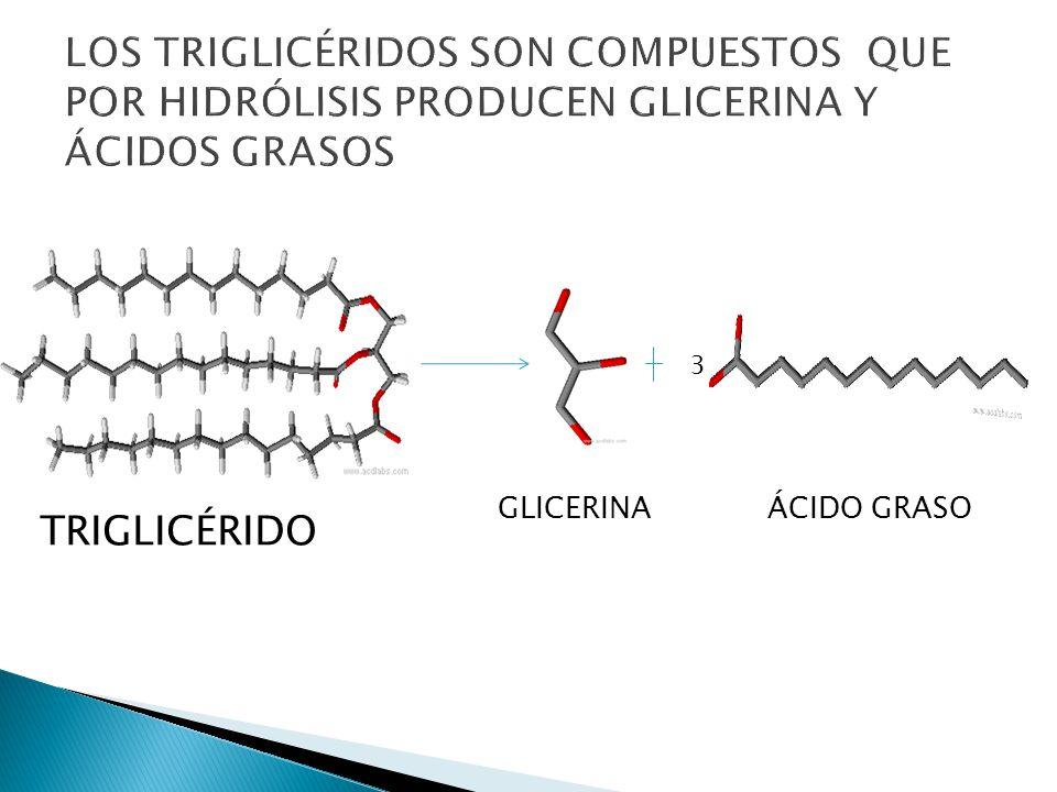LOS TRIGLICÉRIDOS SON COMPUESTOS QUE POR HIDRÓLISIS PRODUCEN GLICERINA Y ÁCIDOS GRASOS