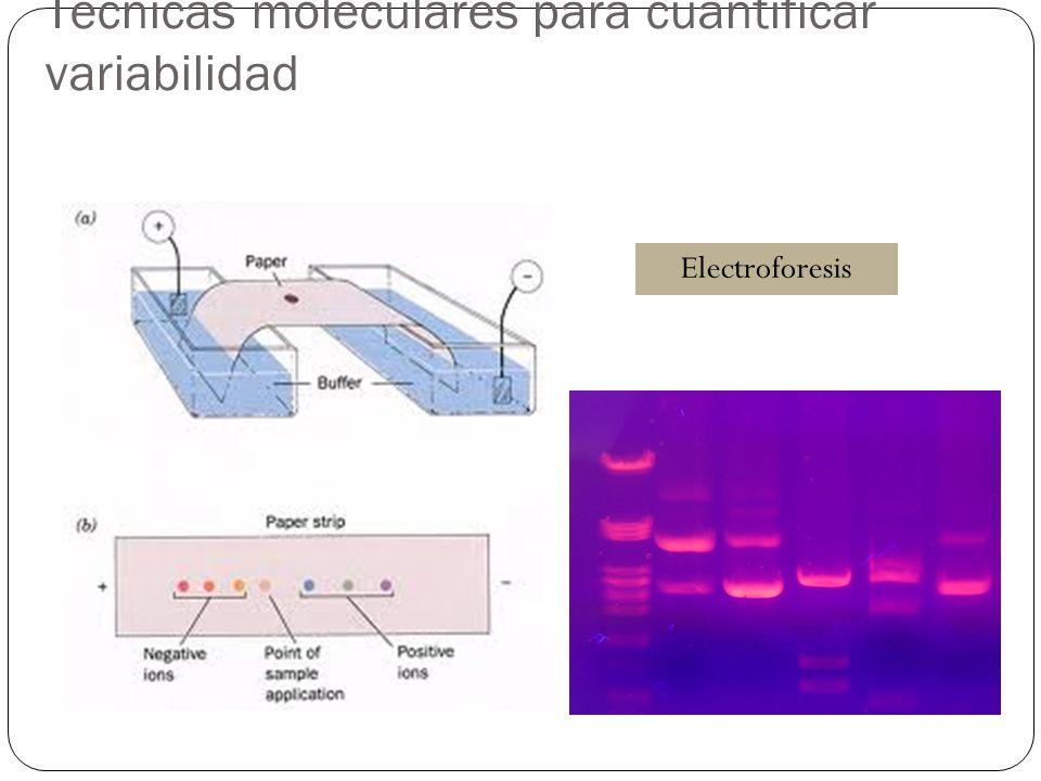 Técnicas moleculares para cuantificar variabilidad