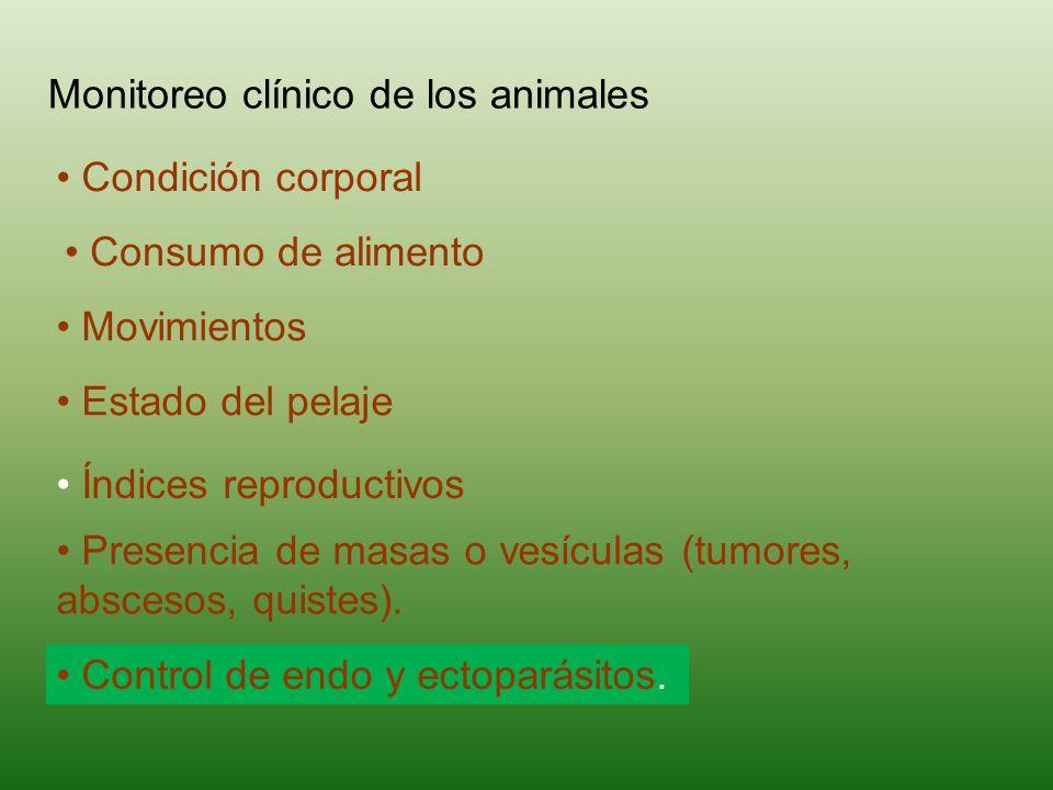 Monitoreo clínico de los animales