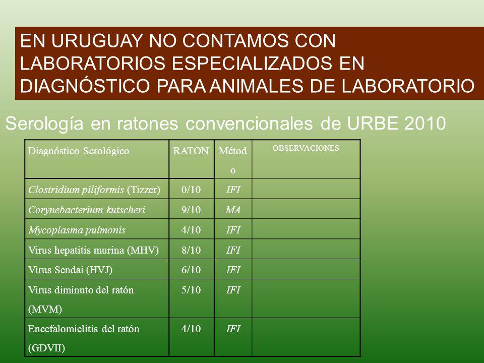 Serología en ratones convencionales de URBE 2010