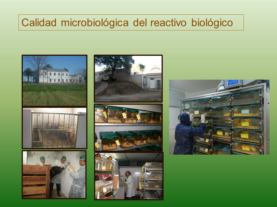Calidad microbiológica del reactivo biológico