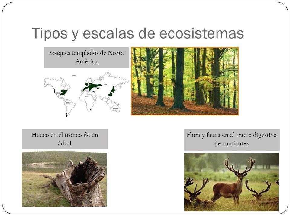 Tipos y escalas de ecosistemas