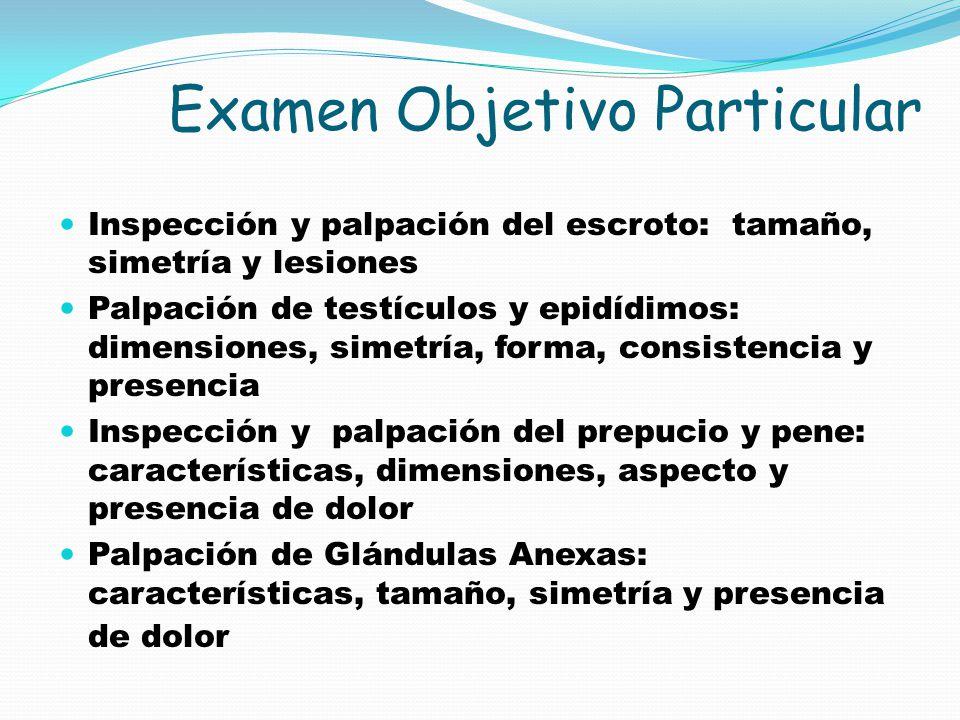 Examen Objetivo Particular