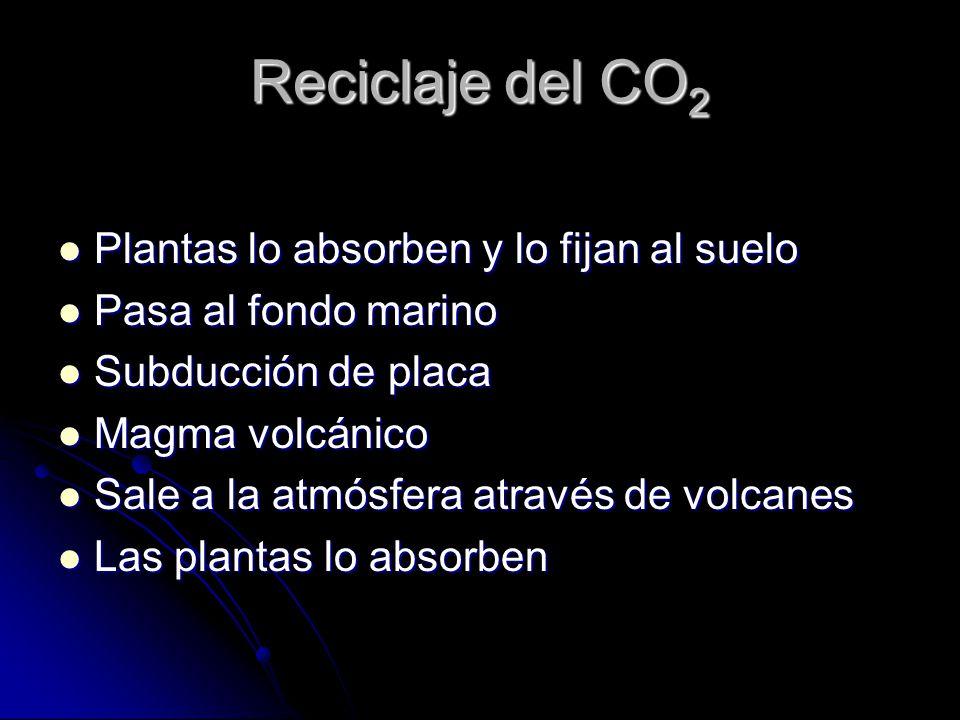 Reciclaje del CO2 Plantas lo absorben y lo fijan al suelo