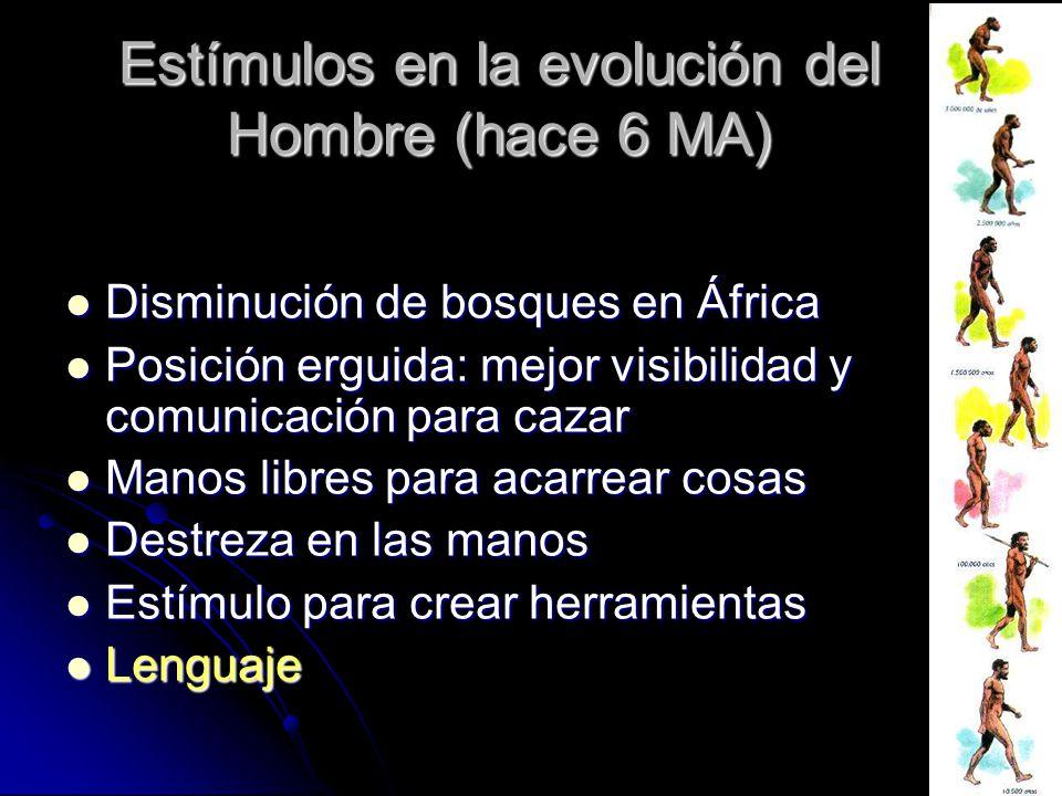 Estímulos en la evolución del Hombre (hace 6 MA)