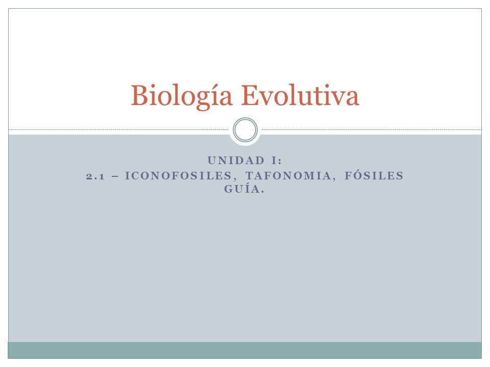 Unidad I: 2.1 – Iconofosiles, tafonomia, Fósiles guía.