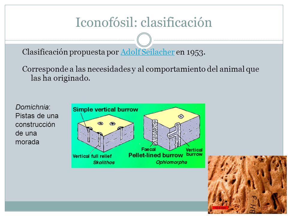 Iconofósil: clasificación