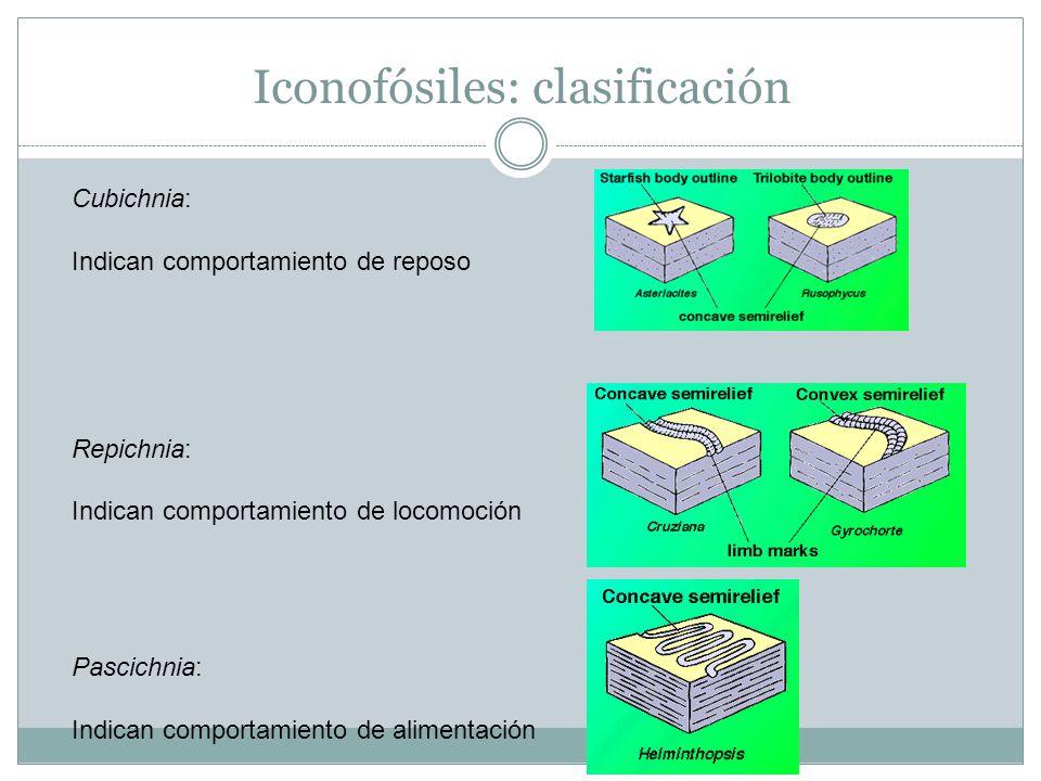 Iconofósiles: clasificación