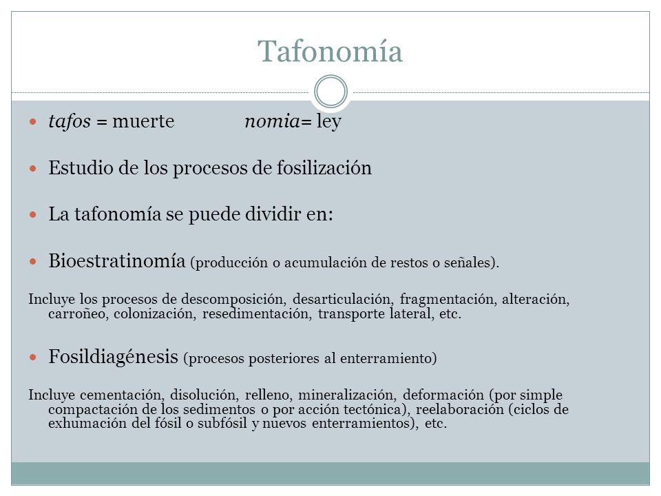 Tafonomía tafos = muerte nomia= ley