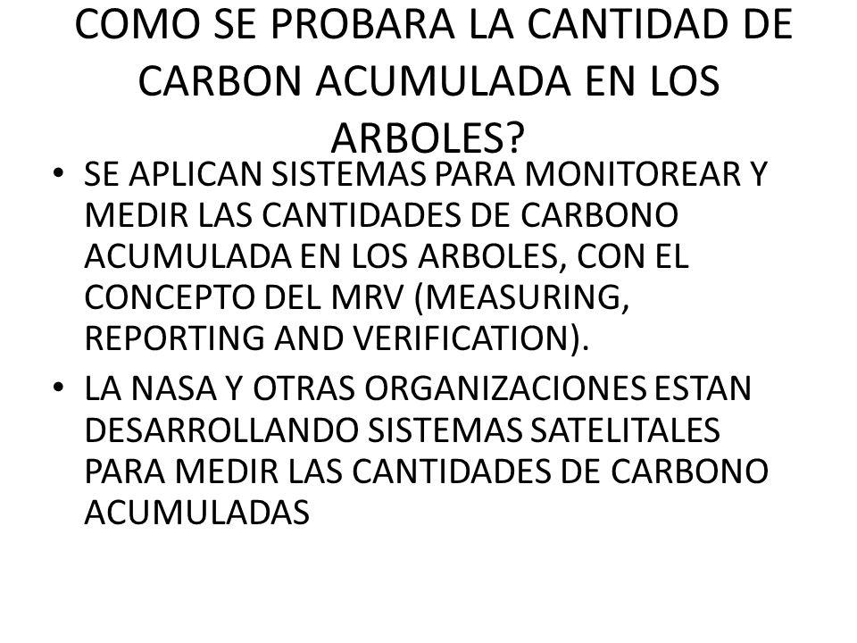 COMO SE PROBARA LA CANTIDAD DE CARBON ACUMULADA EN LOS ARBOLES