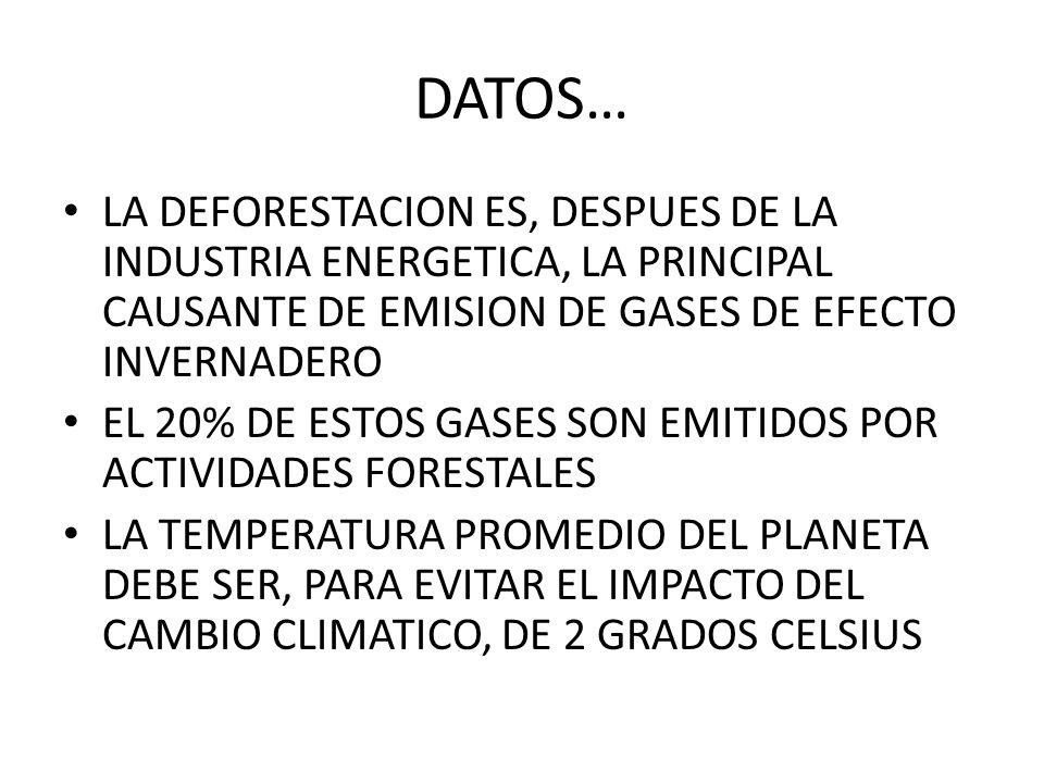 DATOS… LA DEFORESTACION ES, DESPUES DE LA INDUSTRIA ENERGETICA, LA PRINCIPAL CAUSANTE DE EMISION DE GASES DE EFECTO INVERNADERO.