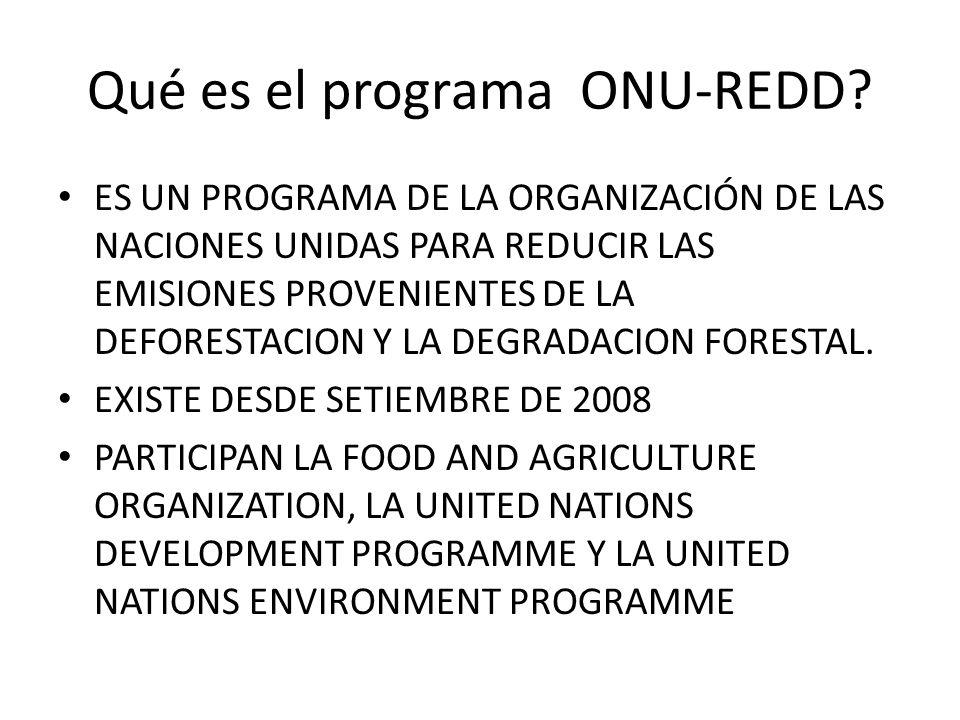 Qué es el programa ONU-REDD