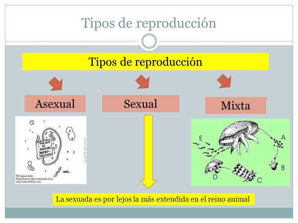 Tipos de reproducción Tipos de reproducción Asexual Sexual Mixta