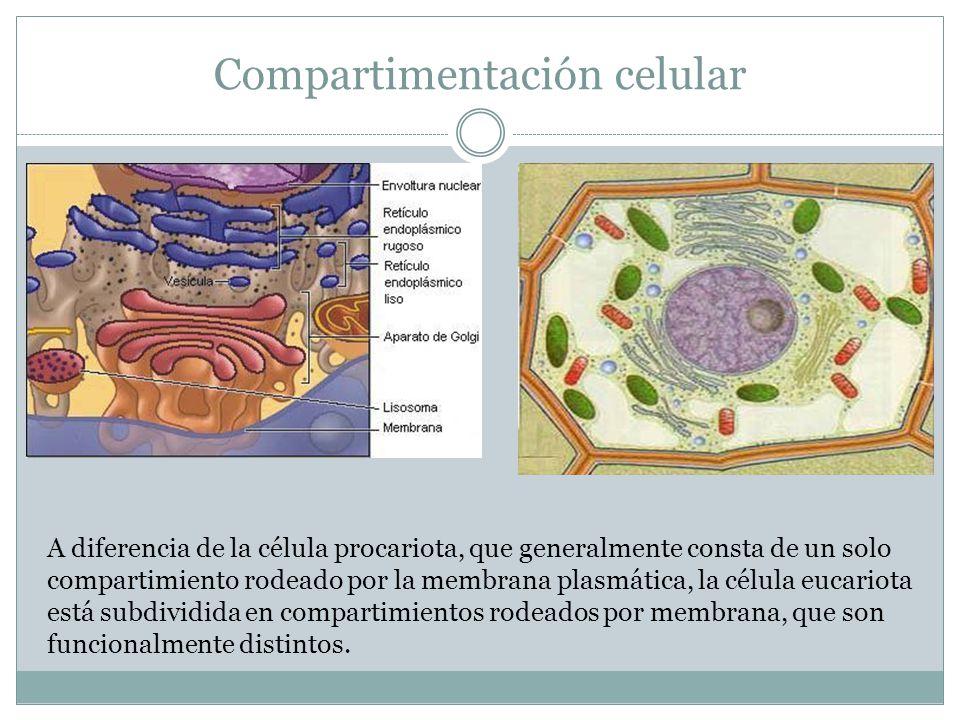 Compartimentación celular