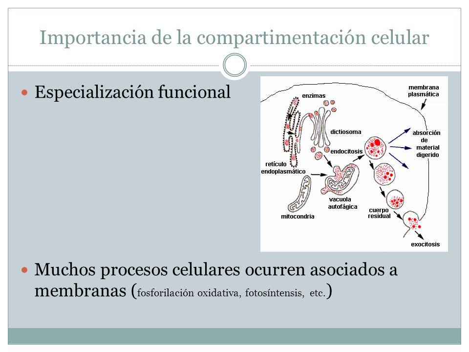 Importancia de la compartimentación celular