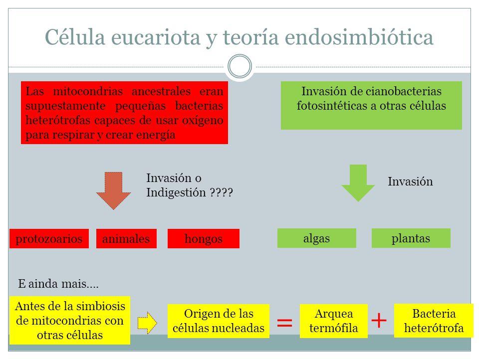Célula eucariota y teoría endosimbiótica