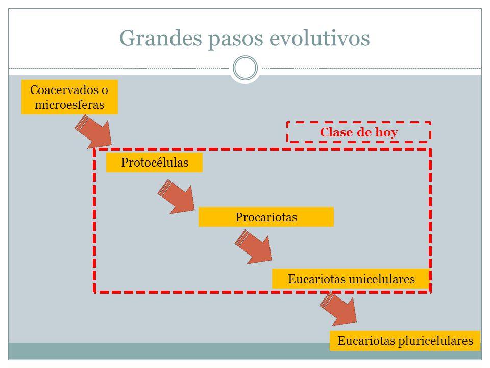 Grandes pasos evolutivos