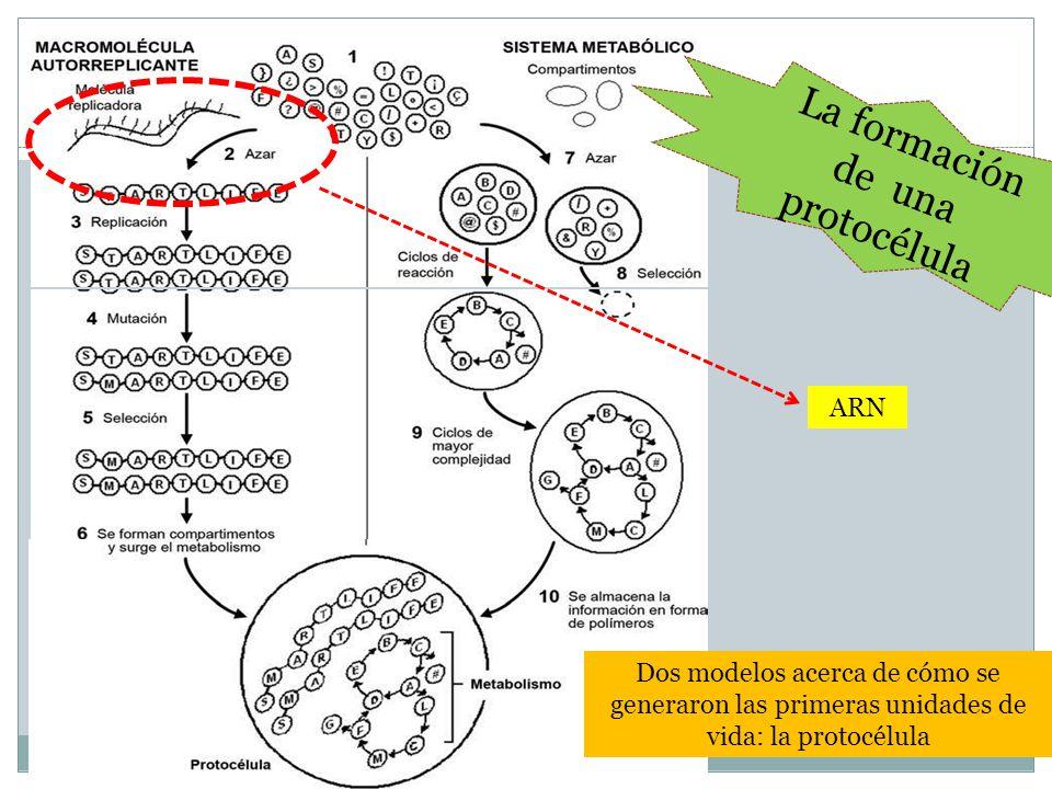 La formación de una protocélula