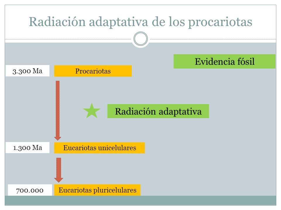 Radiación adaptativa de los procariotas