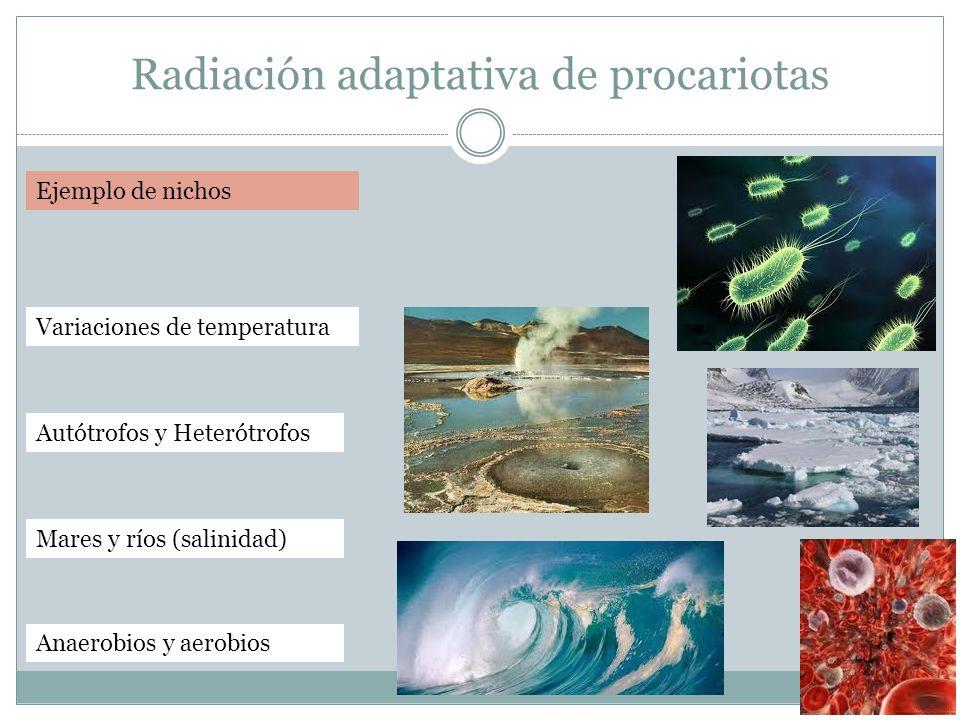 Radiación adaptativa de procariotas