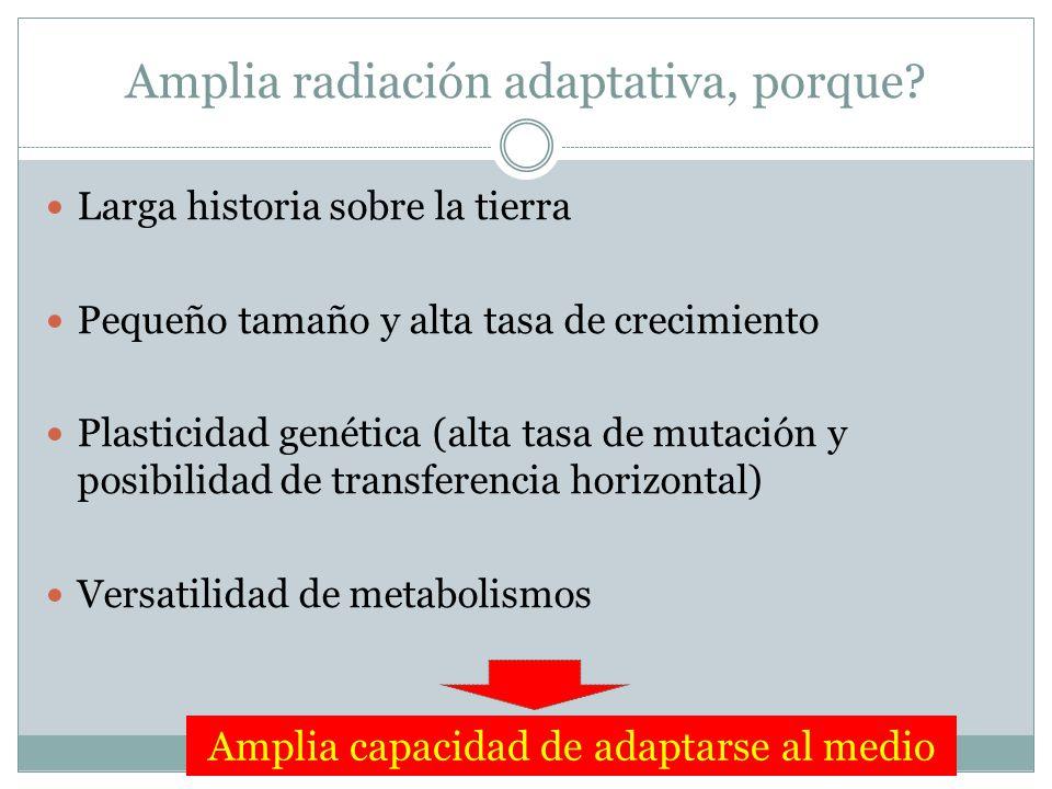 Amplia radiación adaptativa, porque