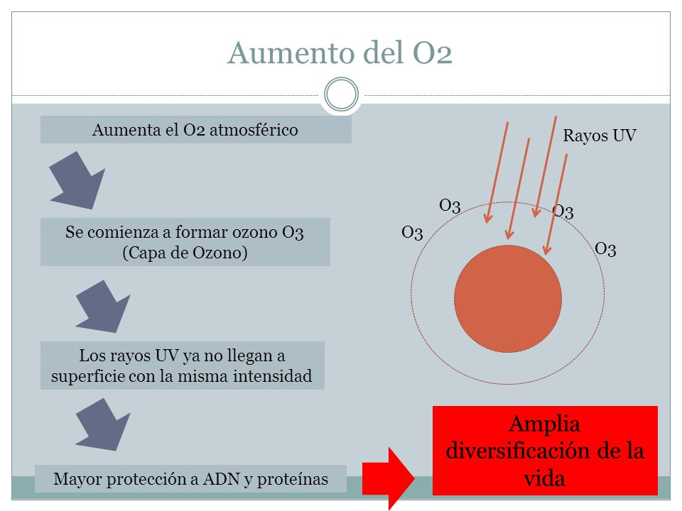 Aumento del O2 Amplia diversificación de la vida