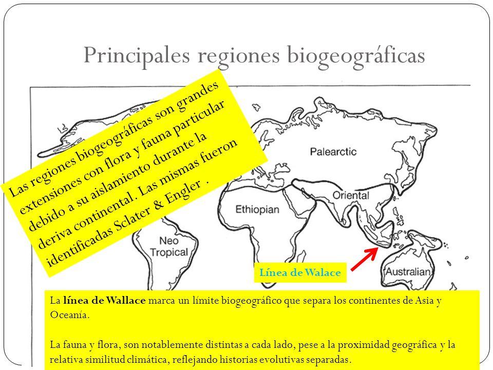 Principales regiones biogeográficas