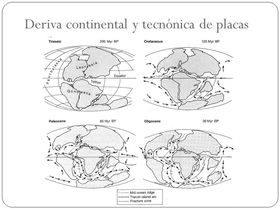 Deriva continental y tecnónica de placas