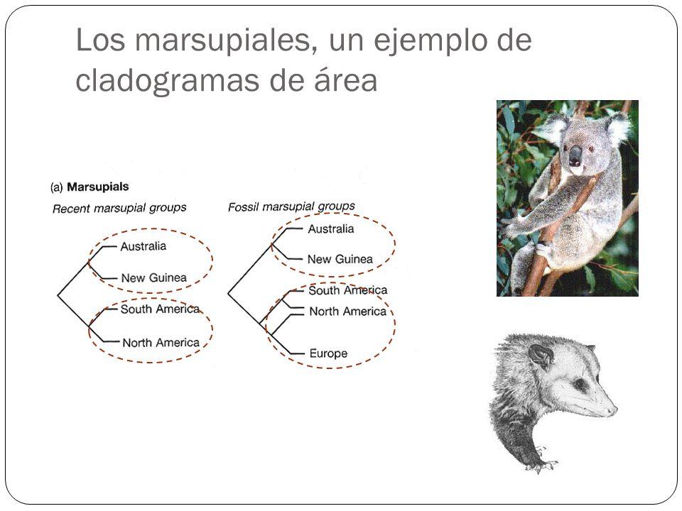 Los marsupiales, un ejemplo de cladogramas de área