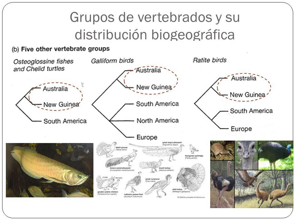 Grupos de vertebrados y su distribución biogeográfica
