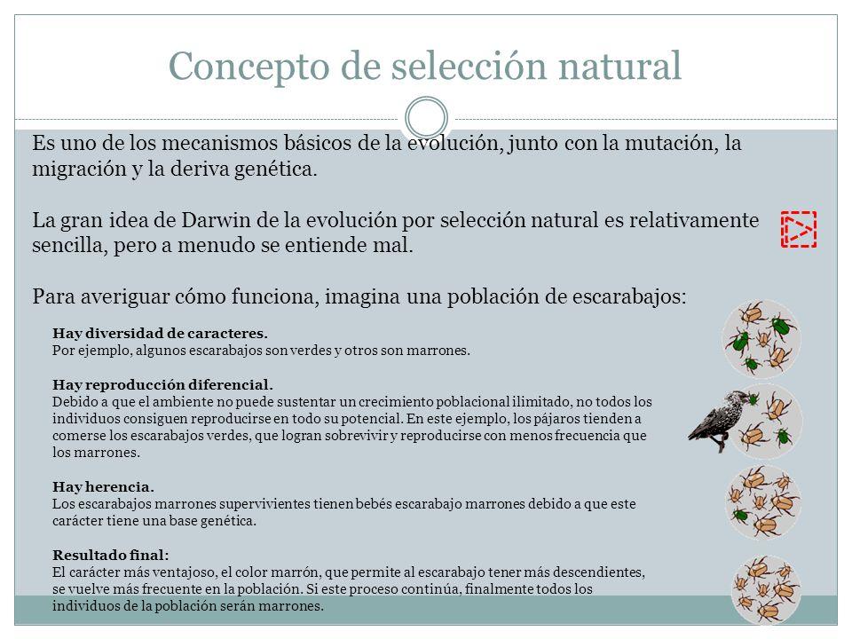 Concepto de selección natural