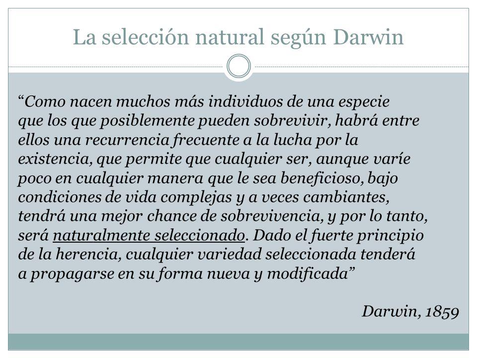 La selección natural según Darwin