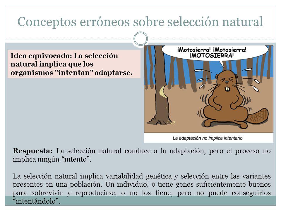 Conceptos erróneos sobre selección natural