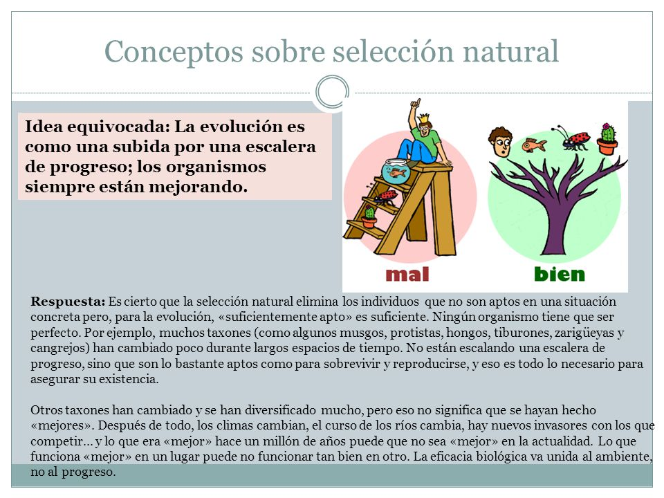 Conceptos sobre selección natural