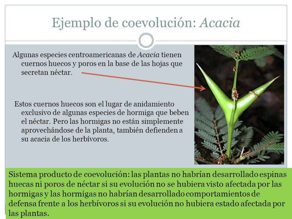Ejemplo de coevolución: Acacia