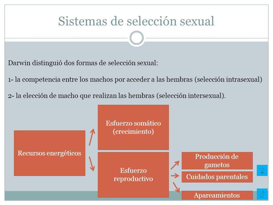 Sistemas de selección sexual