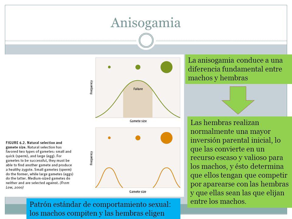 Anisogamia La anisogamia conduce a una diferencia fundamental entre machos y hembras. Las hembras realizan normalmente una mayor.