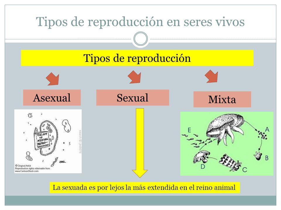 Tipos de reproducción en seres vivos