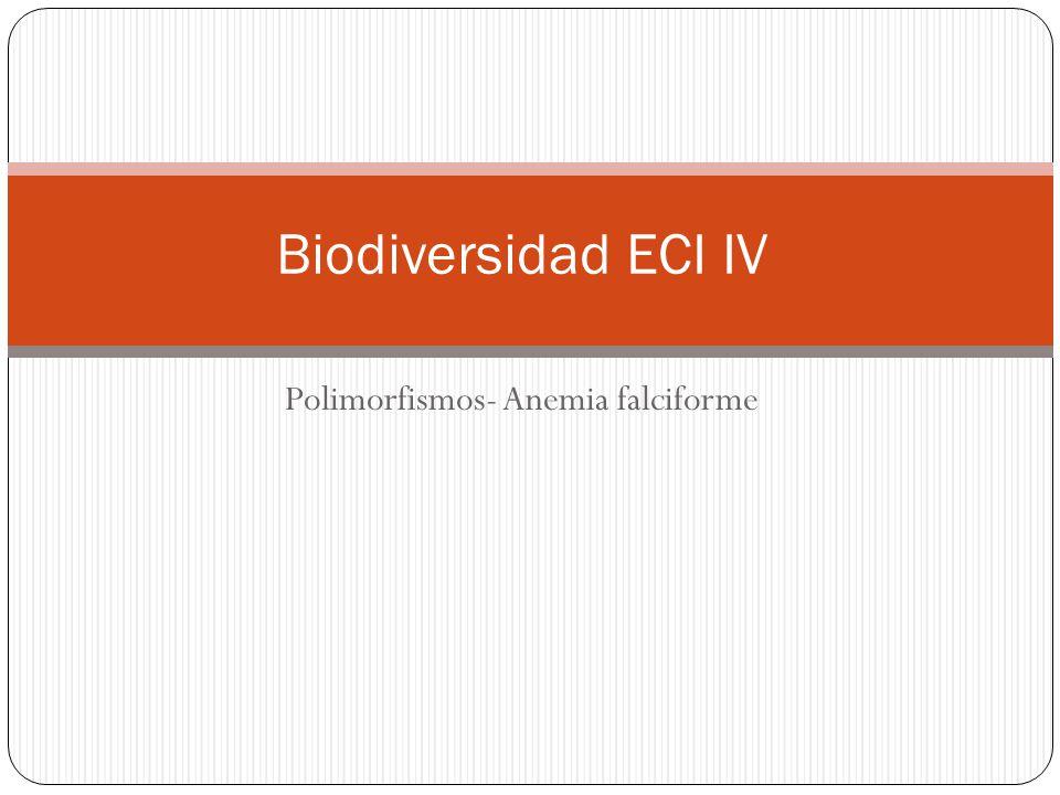 Polimorfismos- Anemia falciforme