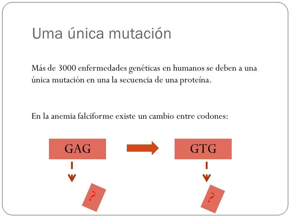 Uma única mutación GAG GTG