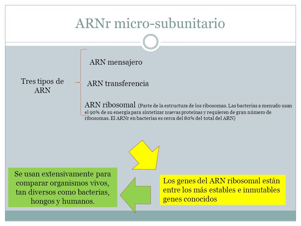 ARNr micro-subunitario