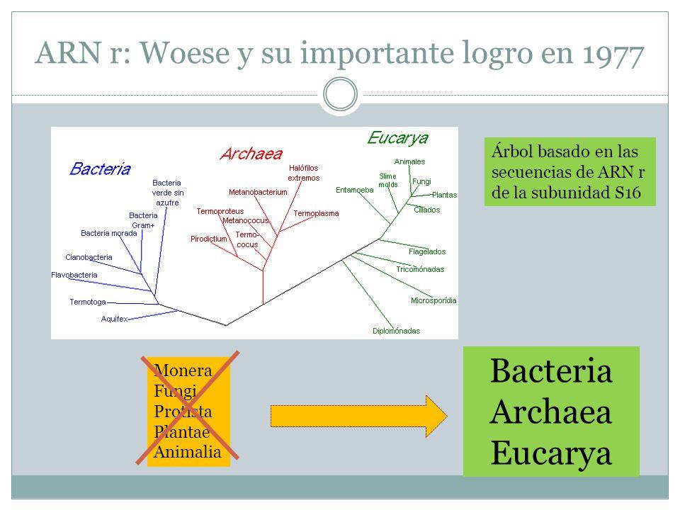 ARN r: Woese y su importante logro en 1977
