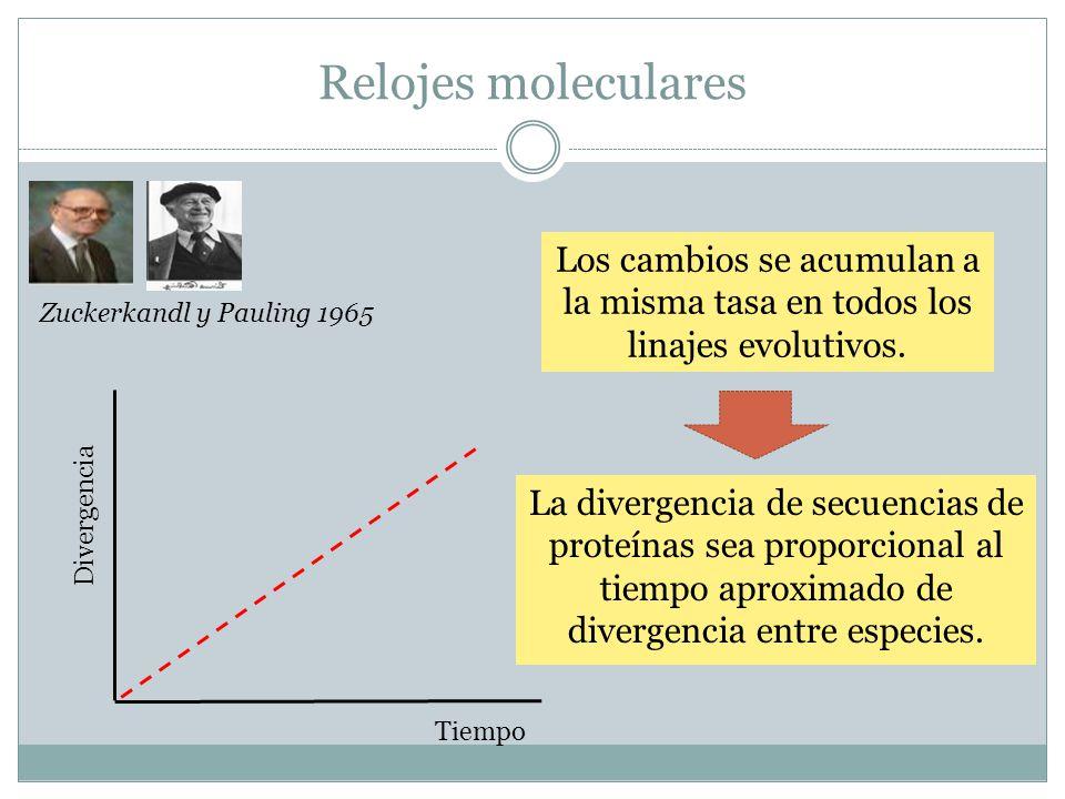 Relojes moleculares Los cambios se acumulan a la misma tasa en todos los linajes evolutivos. Zuckerkandl y Pauling 1965.