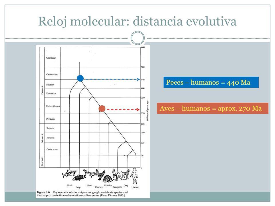 Reloj molecular: distancia evolutiva