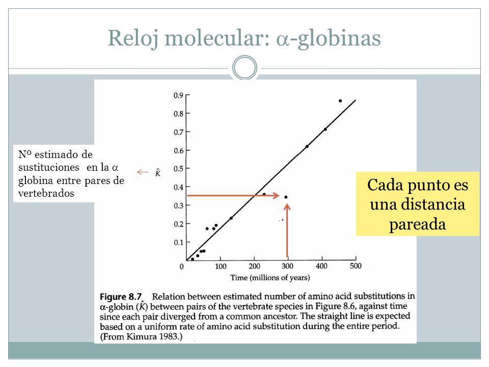 Reloj molecular: -globinas
