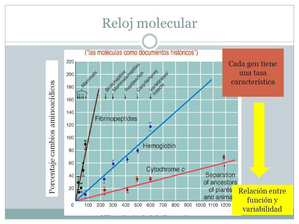 Reloj molecular Cada gen tiene una tasa característica