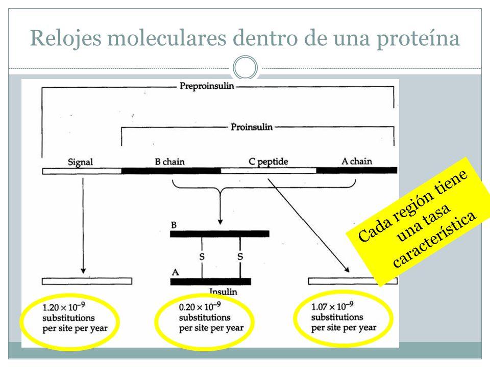 Relojes moleculares dentro de una proteína